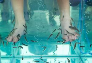 fish therapy at amritsar